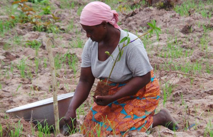 #Pictureit Ghana: woman planting shea tree. Shea butter is eaten or sold 4 cosmetics http://t.co/usF9cZyqKT #IWD2015 http://t.co/abwFFjowlx