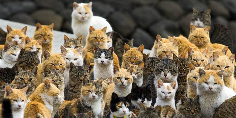 Japanese Island Where Cats Outnumber Humans Six To One http://t.co/9YLu0gTkBd http://t.co/Bv04FDzMEg