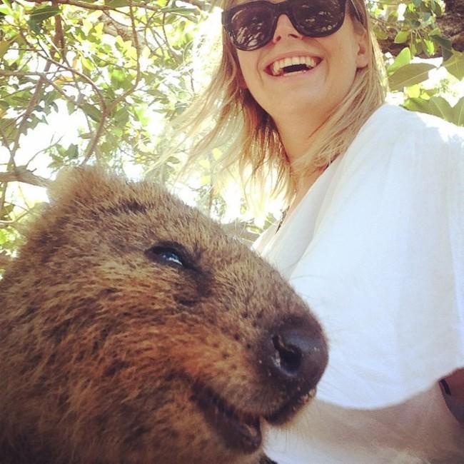 【画像】オーストラリアでリア充っぽい動物が大人気