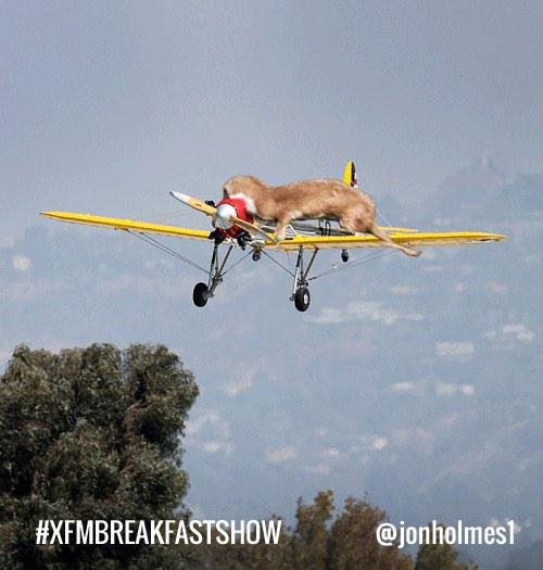 Photographic evidence of why #HarrisonFord crashed his plane http://t.co/5AKHhFZAaX