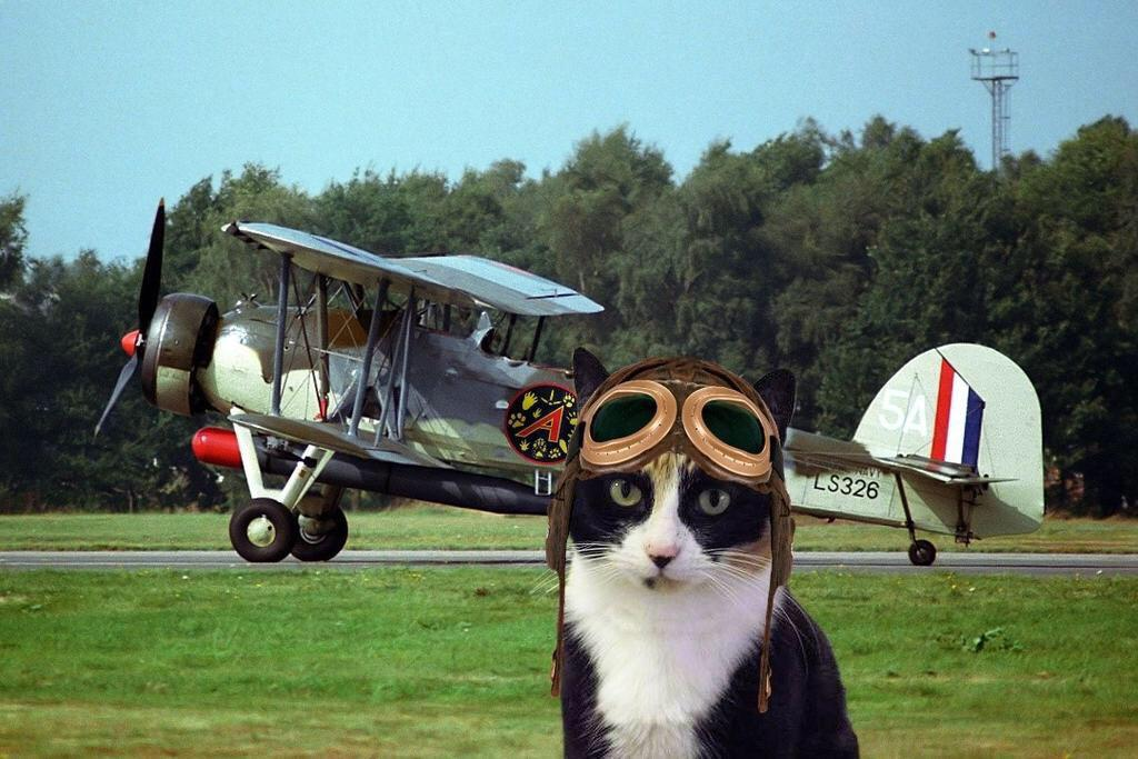 I'm going on an Orient Express Adventure with #TheAviators this #caturday @Ottogingerboy @cheesebox14 @MollyCat7 RU http://t.co/tW0mbQzoCt