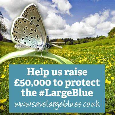 Help us raise 50k to buy #DanewayBanks & protect the #largeblue butterfly #glosbutterflies - http://t.co/SqAbgrHwAd http://t.co/BoTyqJkdV2