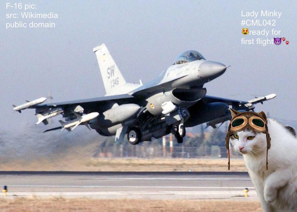Lady Minky needs her beauty sleep😻💤😎 @theaviatorsclub @lucky_GSD  so i can use her F-16 #TheAviators http://t.co/iIMaQx3YF5