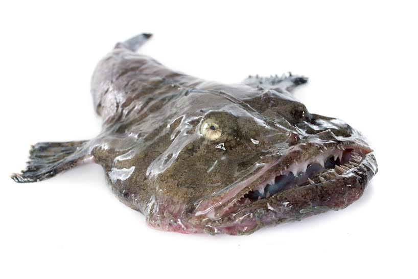 Launching #loveuglyfood to reduce waste. Share pix of strange, ugly, delicious food. To start: monkfish. @foodandwine http://t.co/ev4xzauE19