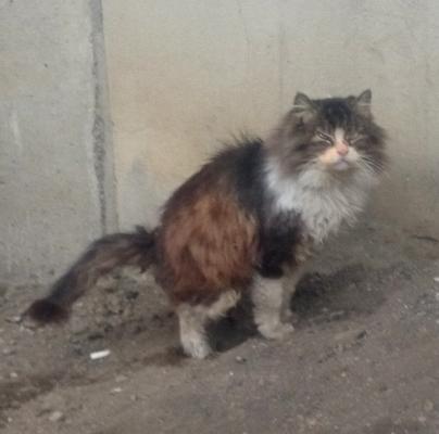 「100万回生きたねこ」にそっくりな野良ネコがいたので思わず撮ってしまいました。 pic.twitter.com/RsUsNgSVhA