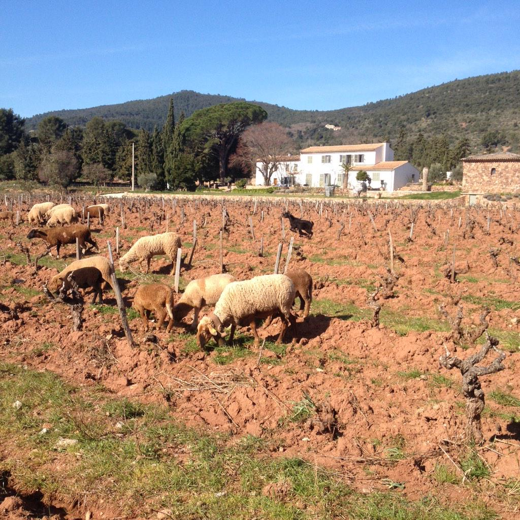 Day at the #vineyard #rose #provence #tondre bio <br>http://pic.twitter.com/gTsrcDewG8