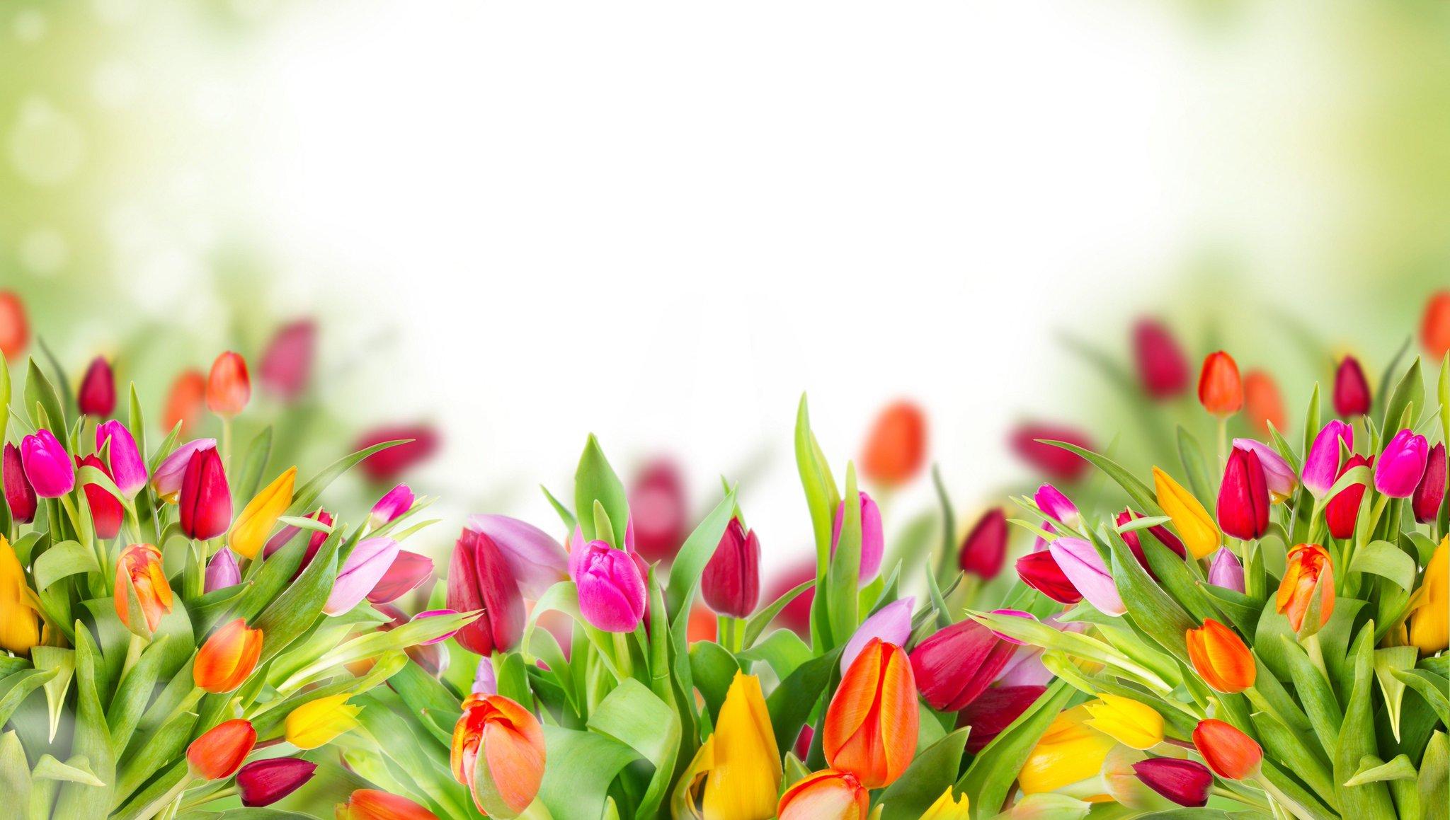 Шаблон для поздравления к 8 марта