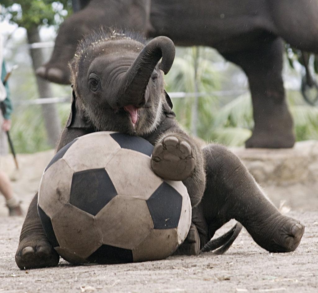 Слон на мяче картинки