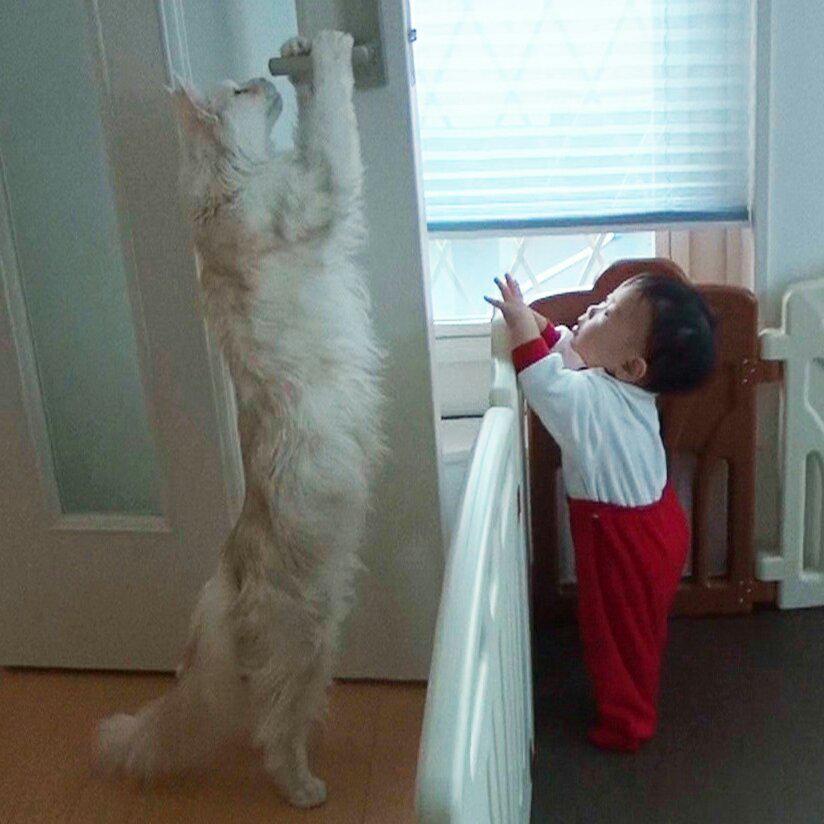 たまに『猫デカくないですか?』とリプを頂きますが、デカいですw pic.twitter.com/MV6Tt7dxww