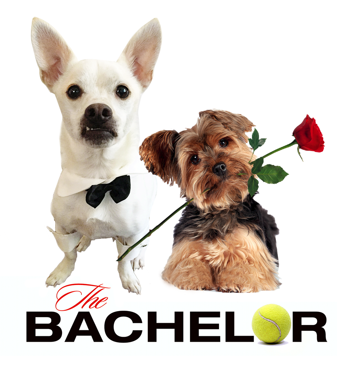 Most dramatic #RoseCeremony ever, and she accepted my rose! #TheBachelor #TheBachelorFinale #dogsoftwitter #adoption http://t.co/LsIZ7qqwqk