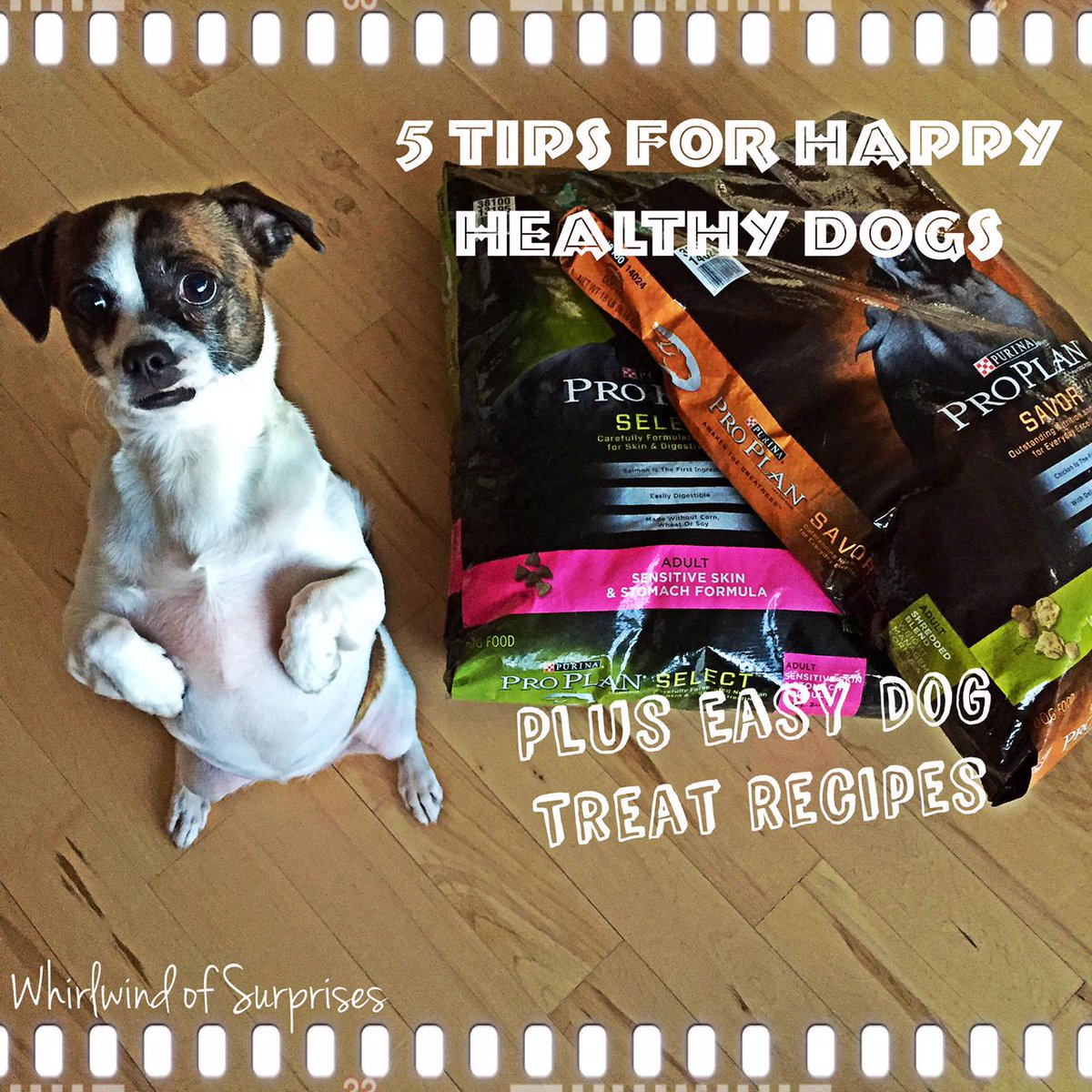 5 Tips for Happy Healthy Dogs, Easy Dog Treat Recipes