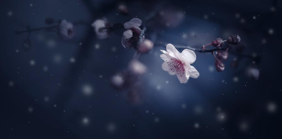 plum blossom by Mei xiang @edaccessible @stevekrohn @_Akanshagautam @Akanshagautam_ http://t.co/j2bZ5slbnZ