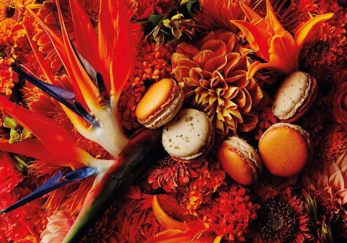 Pierre Hermé Paris invites you to discover the Jardin en Sicile http://t.co/7LgAl2PvAM