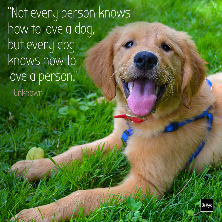 How to love a dog