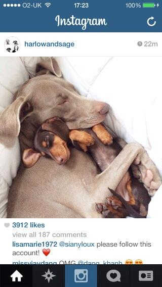 It's essential to follow these dogs on Instagram. Making my heart melt! 🐶 http://t.co/bDXQX9fPIg