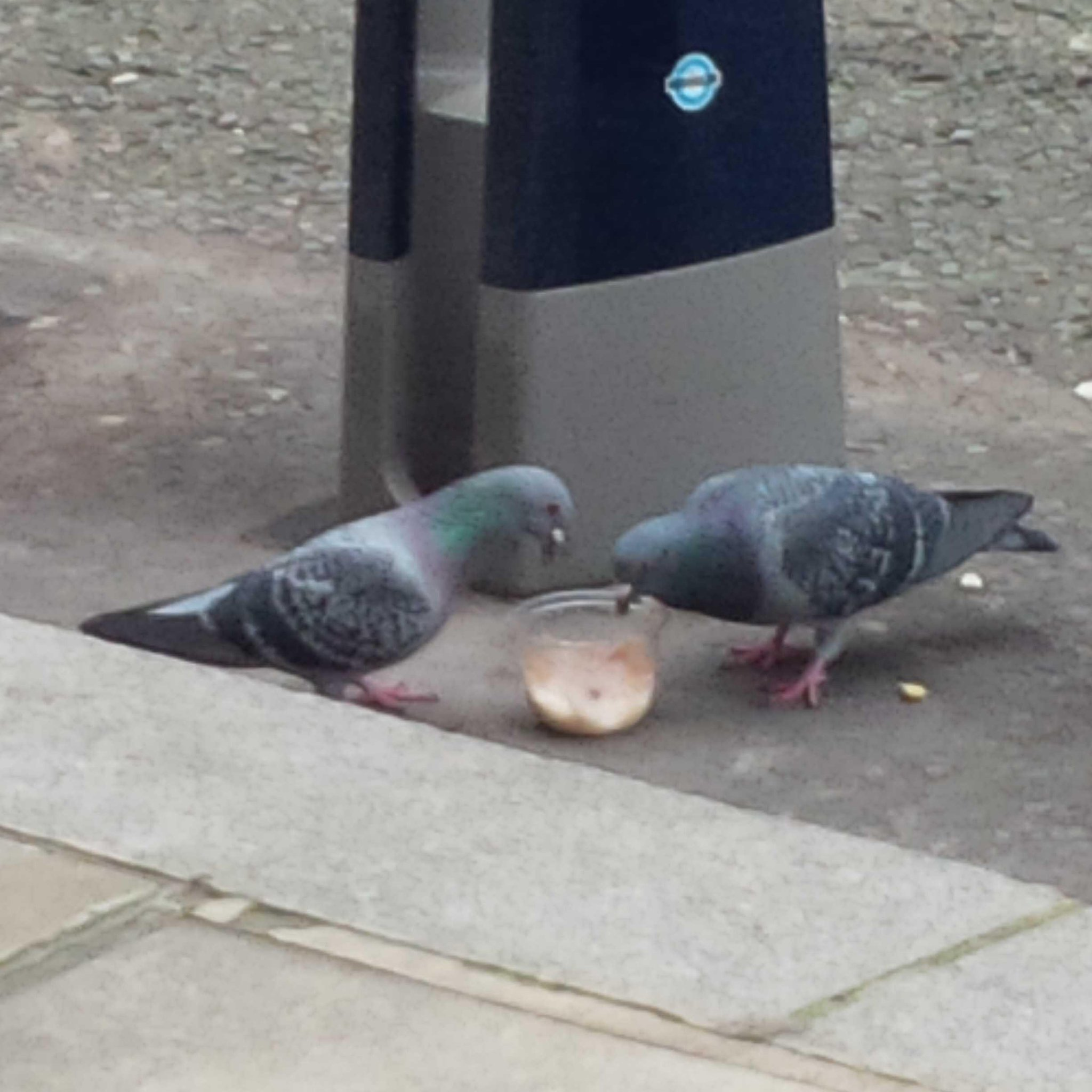 Kensington is now so posh, even the pigeons eat granola and yoghurt for breakfast. http://t.co/7cXPyJJZTW