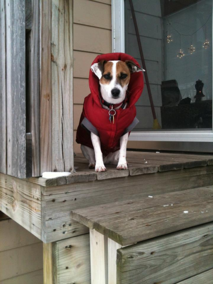 Twitter / PedigreeUS: Look at this fashionable pup! ...
