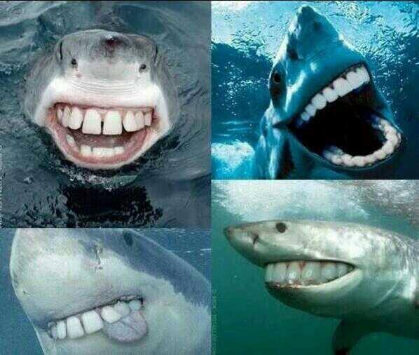 Ocean view on twitter sharks with human teeth not so scary now subsealevel sharks with human teeth not so scary now ay picitteropuy7dif13 funny stuff publicscrutiny Images