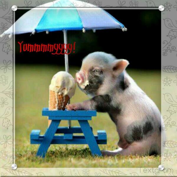 Baby pig eating cake - photo#17