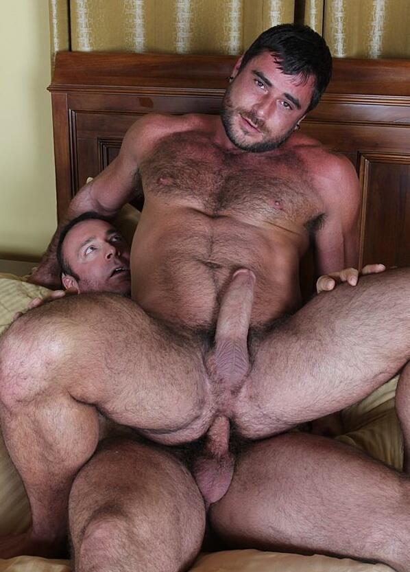 Bears Gay Muscle Porn Pics