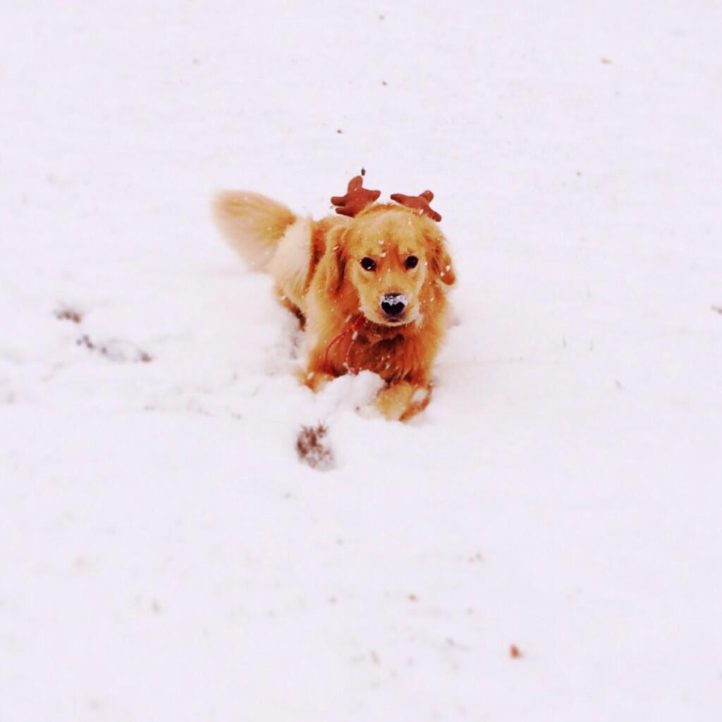 RT @lauren_pesce: First snowfall and we got a reindeer in the backyard! @ItsTheSituation 🐾❄️⛄️ http://t.co/ONtic0B35C