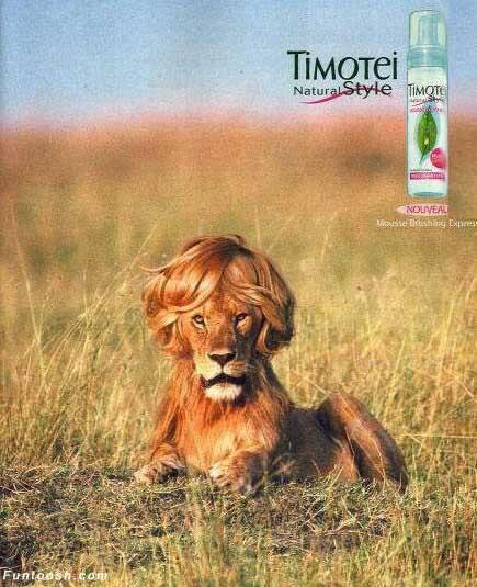 lion in hindi