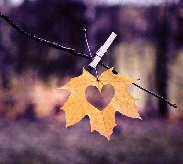 ... Y caen las hojas, llega ....¡¡¡ EL Otoño !!! - Página 9 BahKLS9CEAA_9RE
