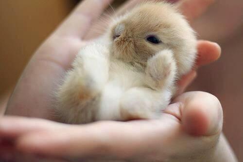 ウサギの赤ちゃん ふわっふわっ