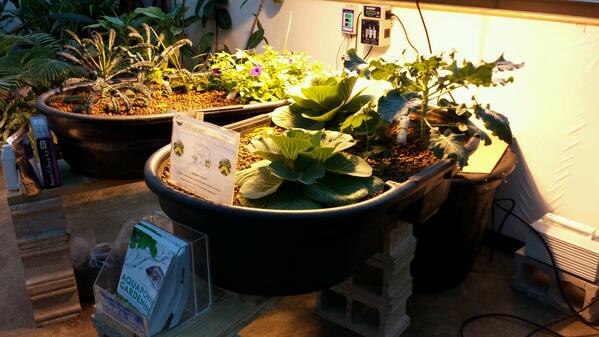 @BG_garden Check out this simple #aquaponics setup demo at @wormsway Total cost is under $600!  #gardenchat http://t.co/CBIyokwn3B