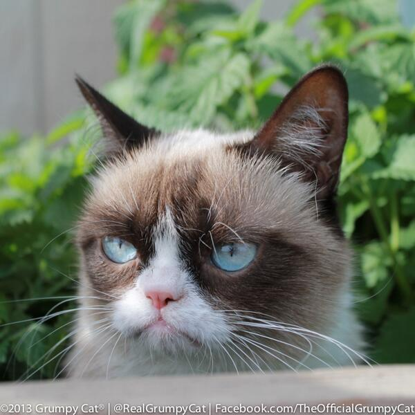 "Grumpy Cat on Twitter: ""The #DailyGrump with ..."