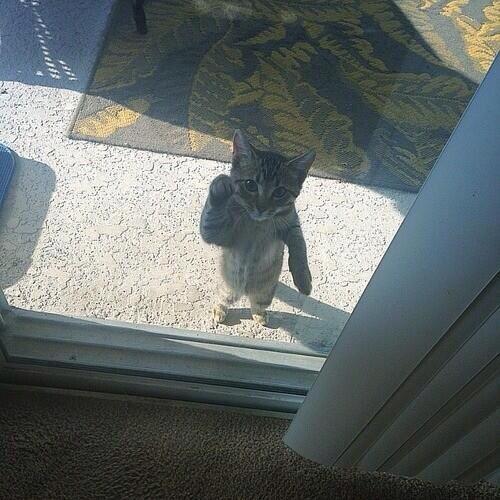 Otwieraj! Musimy pogadać..