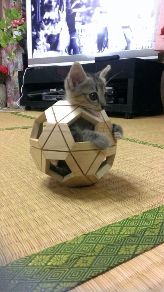 それ、ガンダムのつもり? #neko #cat #猫 #ねこ #ネコ https://t.co/R7pU3ve0R7