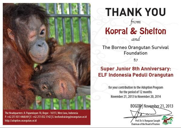 Here is the Digital Certificate of Adoption by Indonesian ELF! Be proud as Ina ELF, guys! Great job! #OrangutanIWSJ http://t.co/eEClGToZNb
