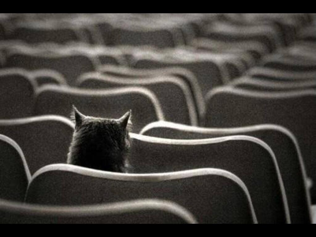 Приколы про одиночество в картинках, приятного дня для