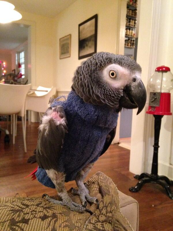 Queequegparrot On Twitter Winston In Another Sweater Good Grief