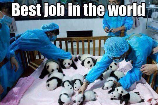 #bestjobintheworld 🐼 http://t.co/zseKZge0eQ