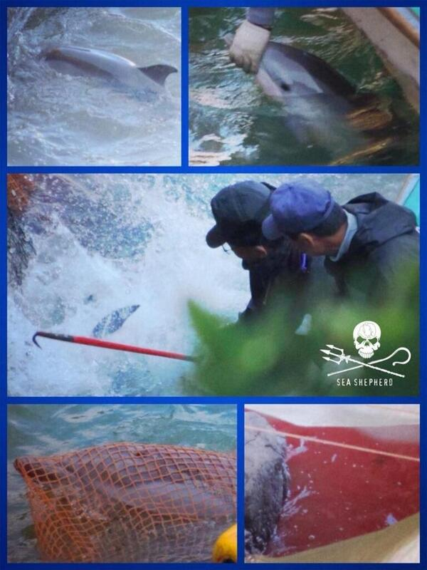 #taiji killers using this tool 2 get dolphins. completely barbaric. help us #ShutTaijiDown forever. http://t.co/mcNyGpeNxJ #EA ^@ysabel_03
