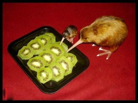 """@CitizenBomber: WARNING: This is cannibalism at its most disturbing… http://t.co/4DATLvnB9e"" < that's funny"