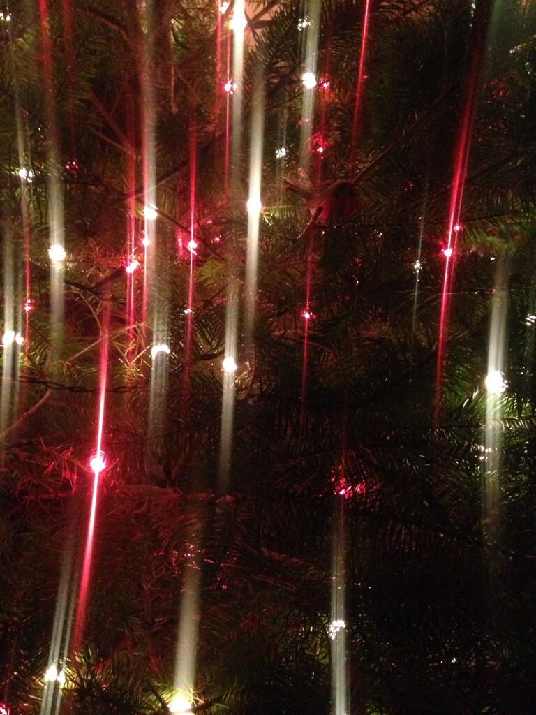 Twitter / ClairePotter: Lights on the tree. The annual ...