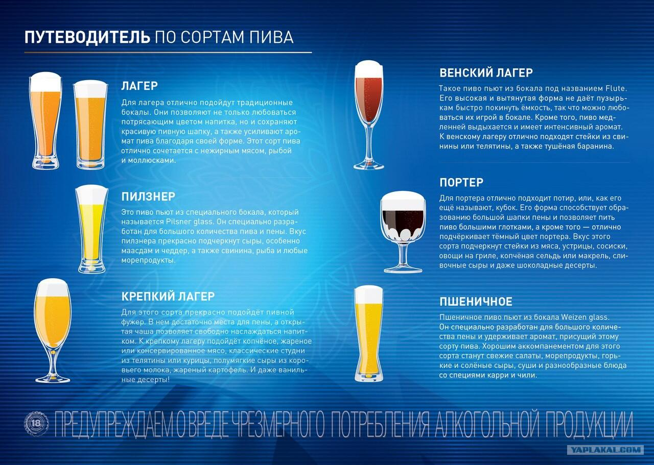 для классификация пива картинки зуб разрушатся