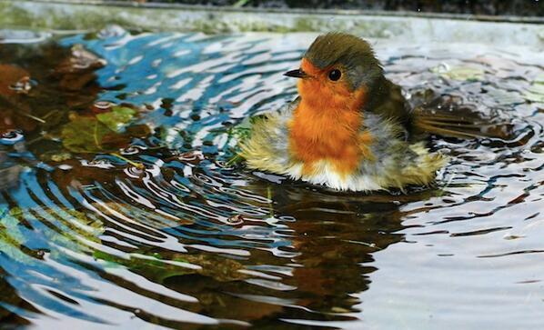 #LittleLarry Robin loved bath time.... #artisthour http://t.co/F7tbtlzFC4