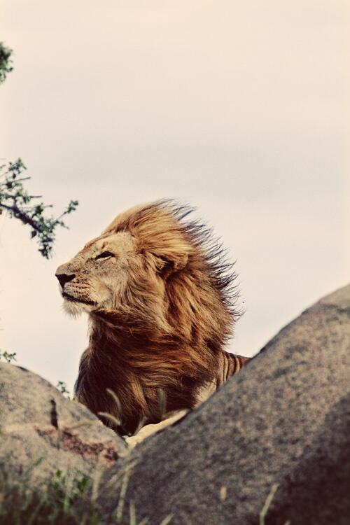 """Hakuna Matata... it means no worries."" #HumpDay #LionKing #quote #photography http://t.co/uIVccp0Mb7 http://t.co/6Lk0bKwUhY"