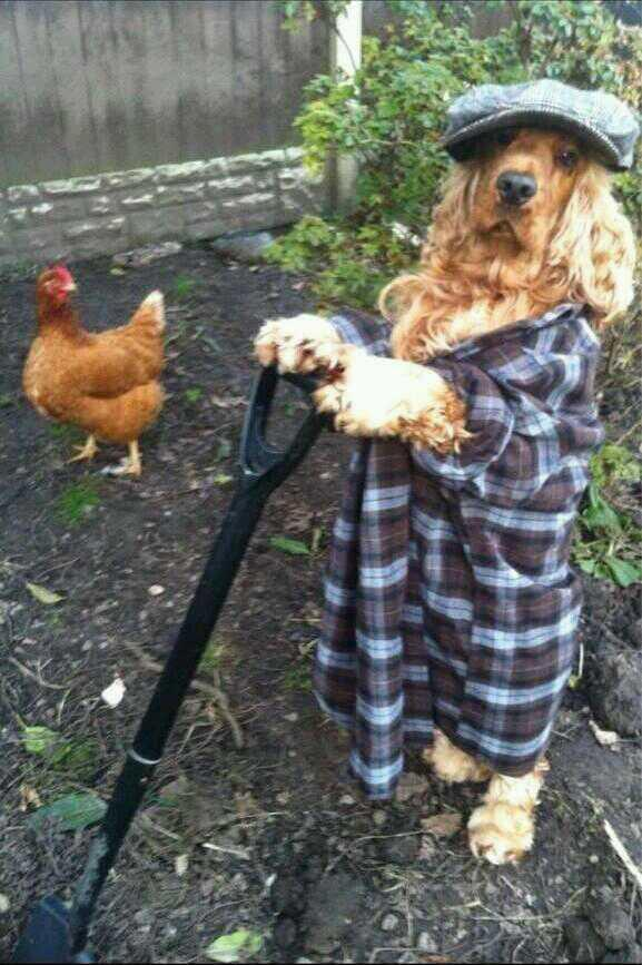 @leolecocker !!!! RT @Bigshirtlesscol: Fucking dogs been digging in the back garden again. http://t.co/SYgstyPior