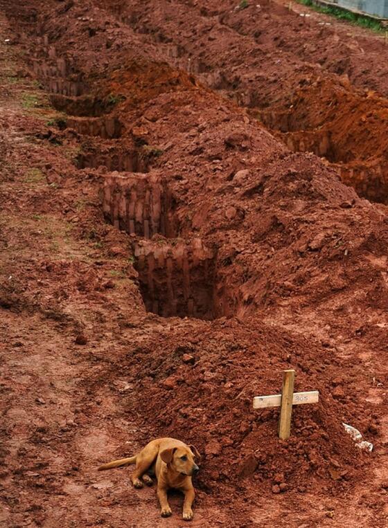 墓標に寄り添う犬  亡き主人を 思っているのだろうか…   この犬の主人は土石流でなくなった。 犬は墓地に2日2晩寄り添った。 https://t.co/5ZdUkRF8rU
