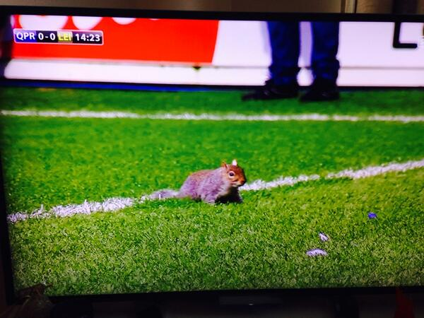 BcAlZ2FIcAAMYHy Squirrel stops play at QPR   Leicester, fans chant Theres only 1 Luis Suarez