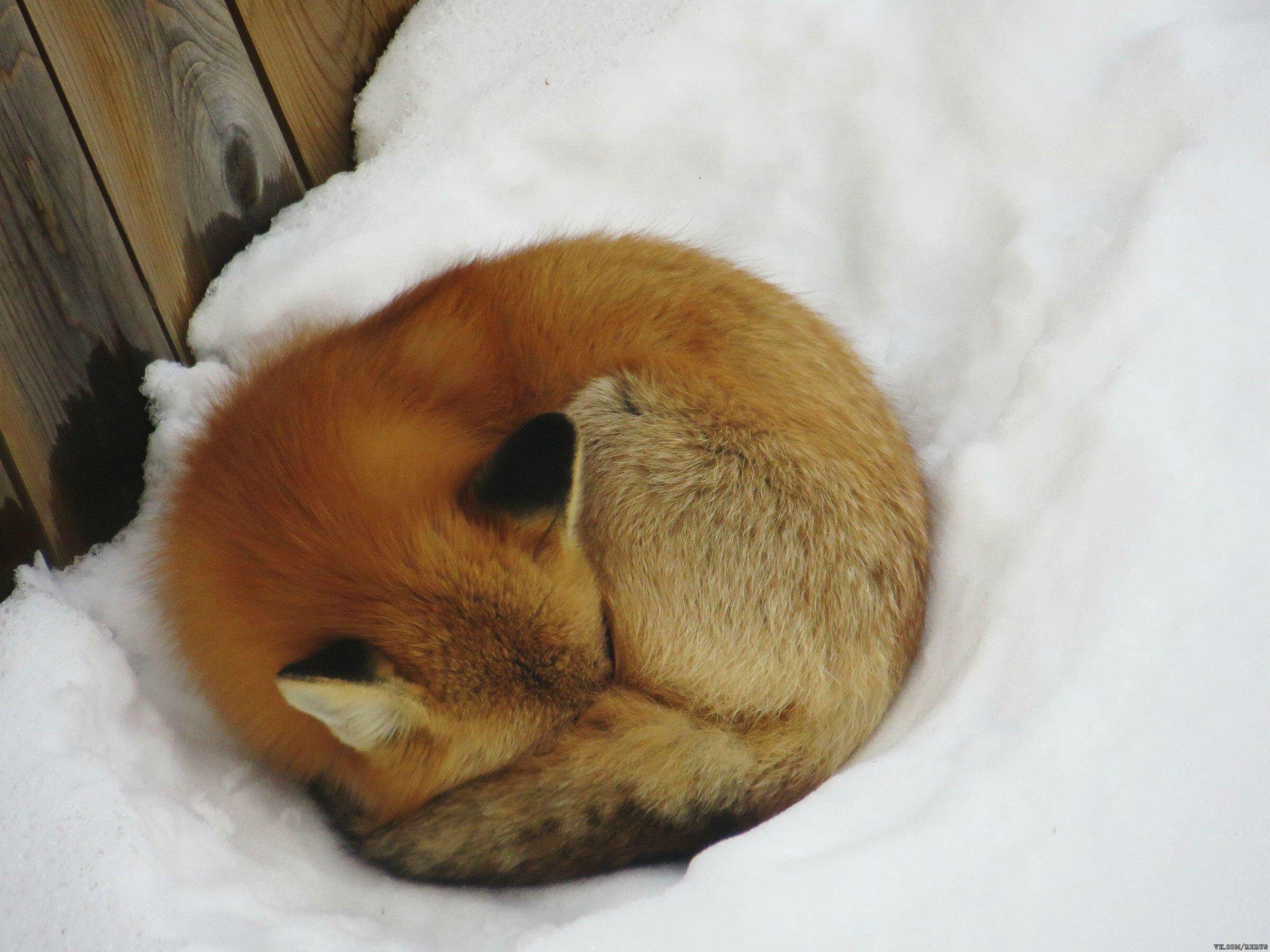 сыпи наружных картинки спящих животных зимой блюдо будет