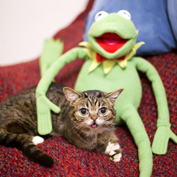 Lil BUB on Twitter:
