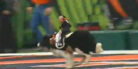 Sweet lord it's a monkey riding a dog. Long live the NFL. http://t.co/VSu5qP8R4h