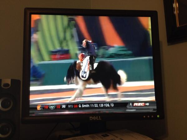 Monkey riding a dog in Cincinati at the Bengals game. Thanks @nflredzone http://t.co/S9bBlI3htj
