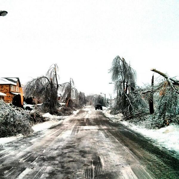 A road where almost every tree was bent/broken by the #icestorm. #icestorm24 #brampton #tweetit #faceit http://t.co/q4BGBAmXPA